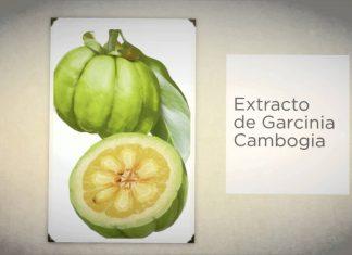 extract garcinia cambogia