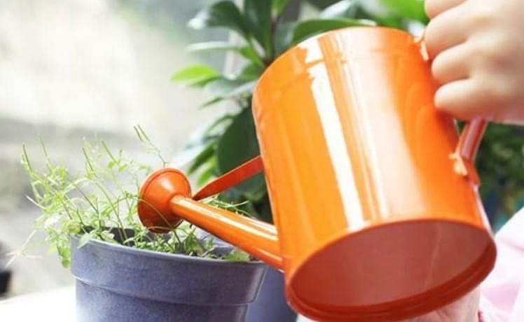 infuzie ceapa plante